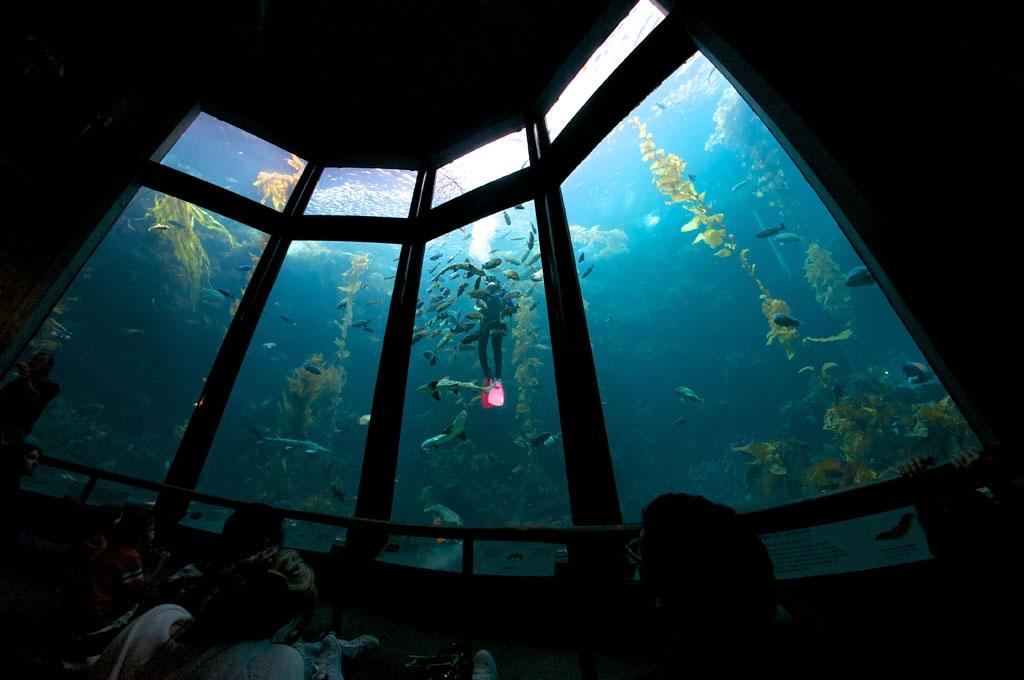 Image Gallery Monterey Bay Aquarium Discount 2015